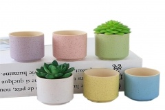 indoor succulent containers